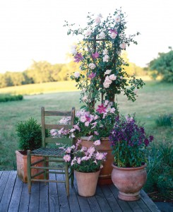 A garden, complete with a climbing rose, grows in just a few containers.